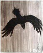corbeau biaggi