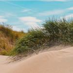 beach-4011310_1280