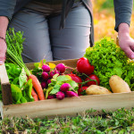 Close up Of Woman Holding Crate With Vegetable