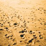 Traces de pas dans le sable.
