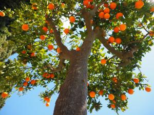 « Ce n'est pas vous qui m'avez choisi, c'est moi qui vous ai choisis et établis, afin que vous alliez, que vous portiez du fruit, et que votre fruit demeure. » (Jn, 15)