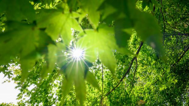 Vivre une démarche écologique et spirituelle pendant le Carême.